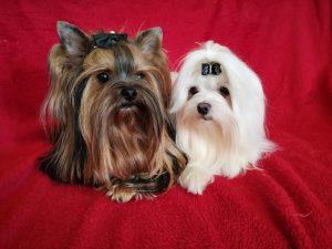 Mickey Maus & Kira